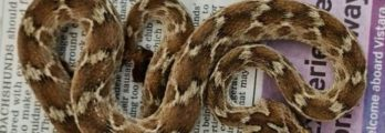 snake in shipment